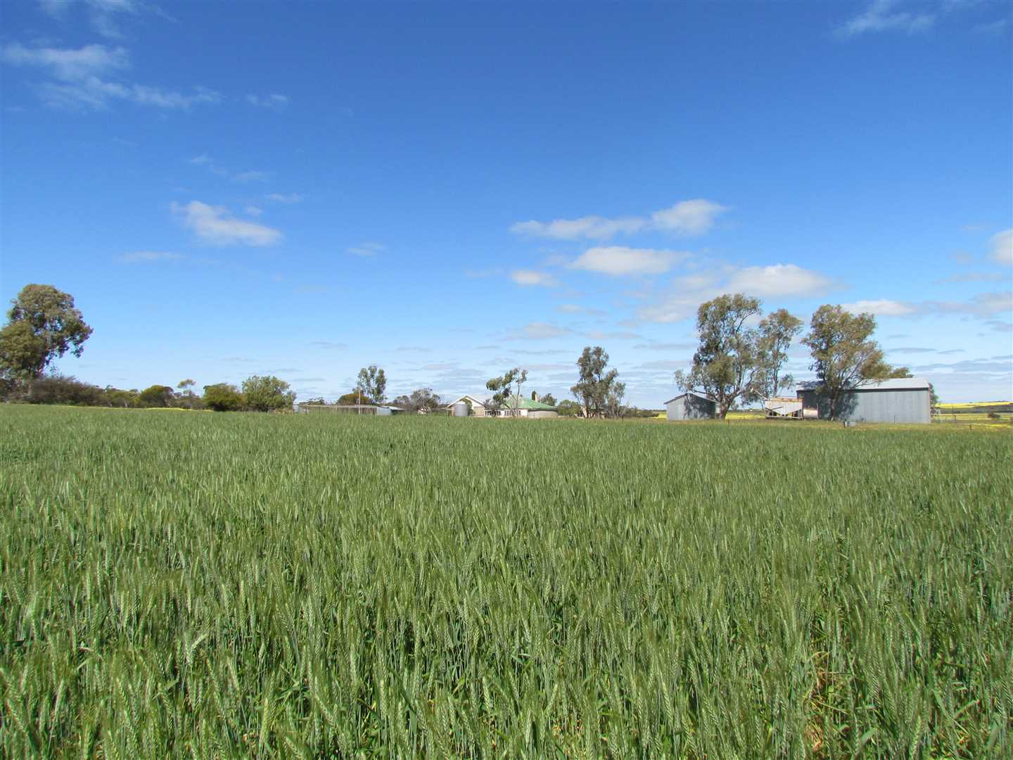 Carranya Farm (1897 Ha - 4687 Ac)