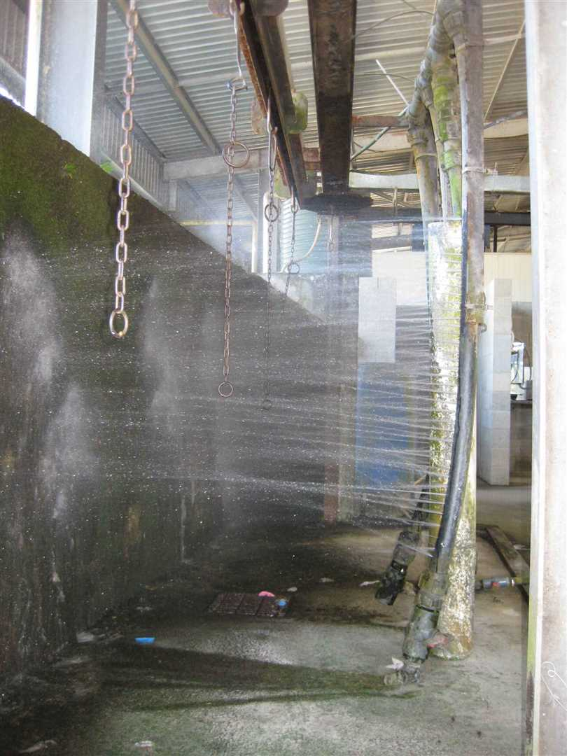 View of part of inside packing shed showing part of high pressure banana wash area