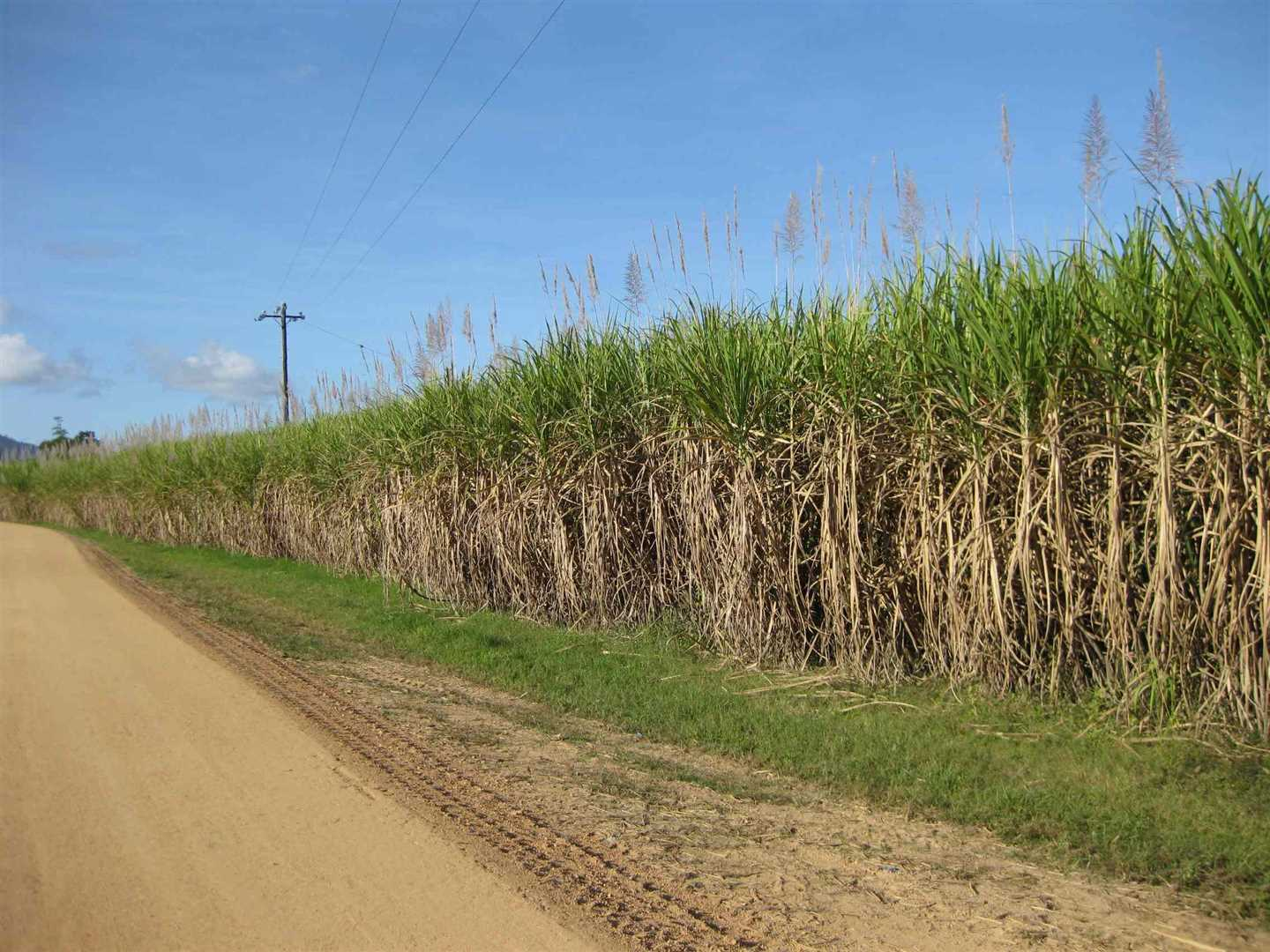 View of part of property showing some cane, photo 2