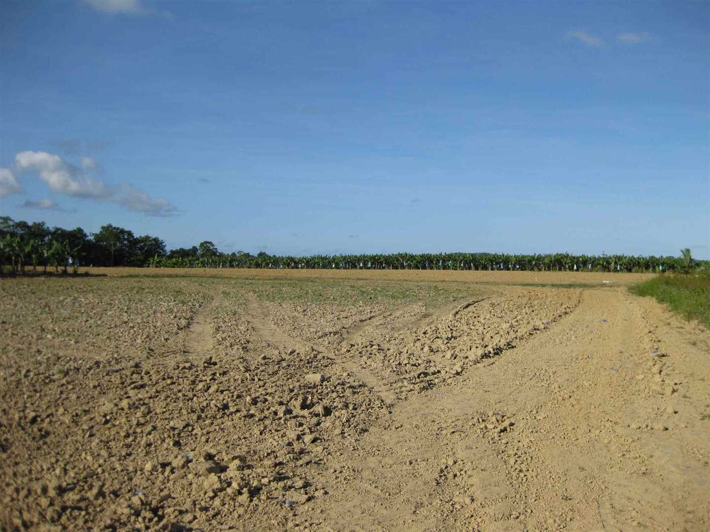 View of part of property showing some fallow land and distant bananas