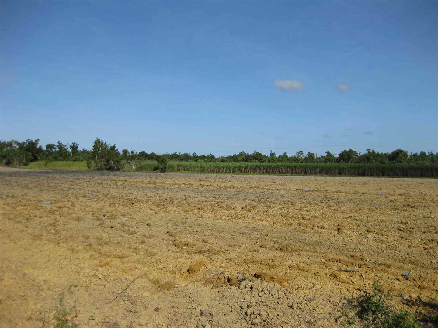 View of part of property showing some fallow land and distant cane