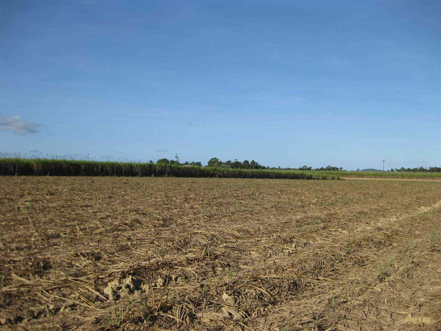 View of part of property showing some harvested cane and distant cane