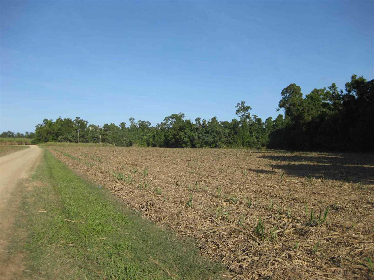 View of part of property showing some harvested cane