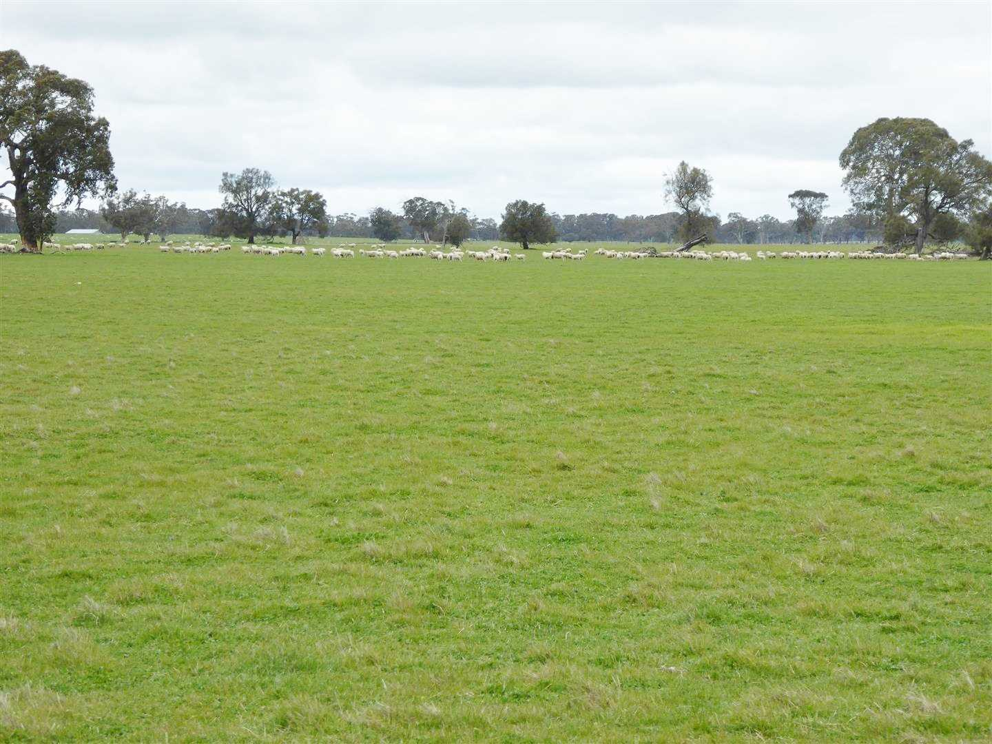 Quality Grazing/Cropping Property - 129.5 Ha / 320 Ac