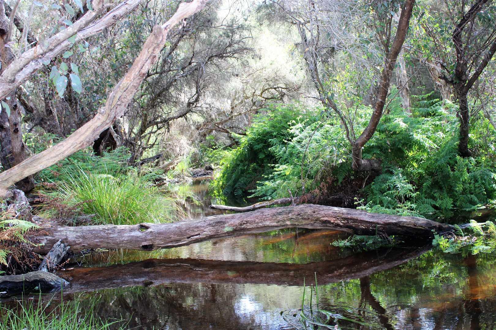 Pristine Spring Water at picnic spot