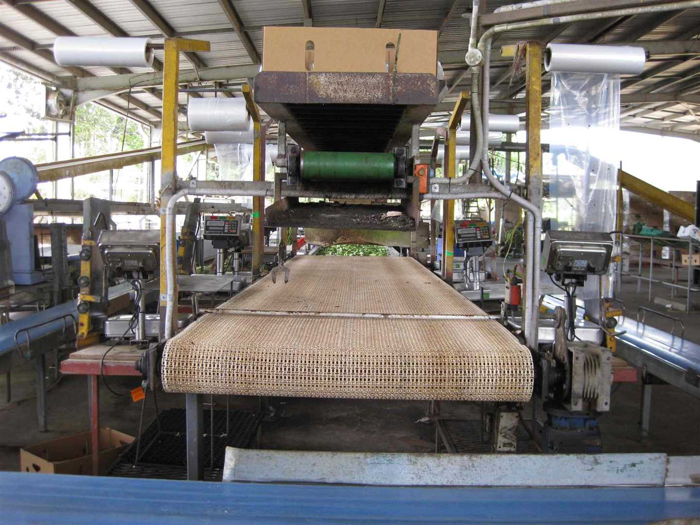 View of part of inside packing shed showing part of packing area and scales