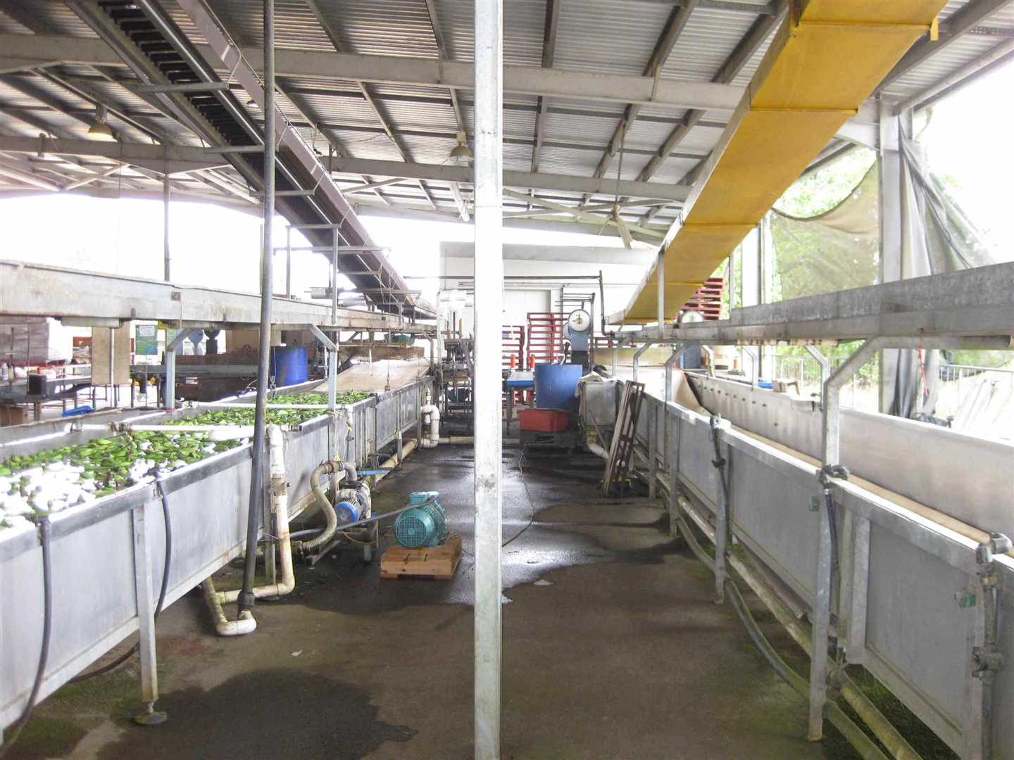 View of part of inside packing shed showing part of two banana troughs