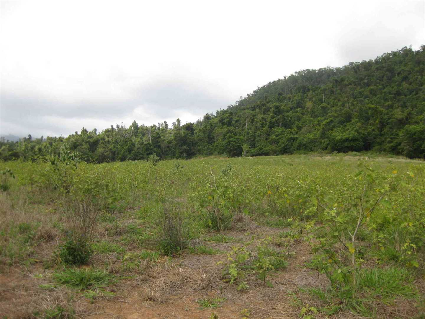 View of part of property showing some cleared undeveloped land