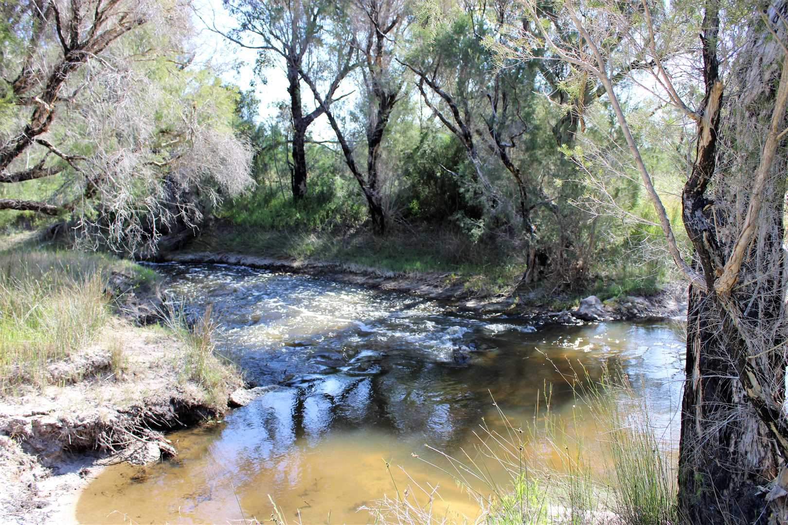 Moore River along West Boundary- Oct 2018