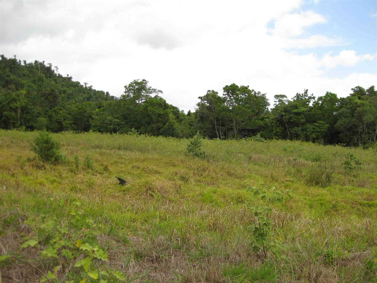 View of part of property showing some cleared undeveloped land, photo 2