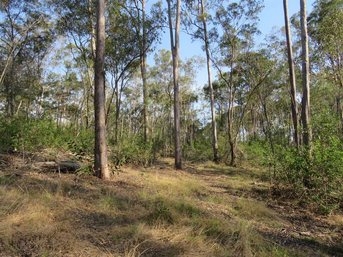 millable spotted gum