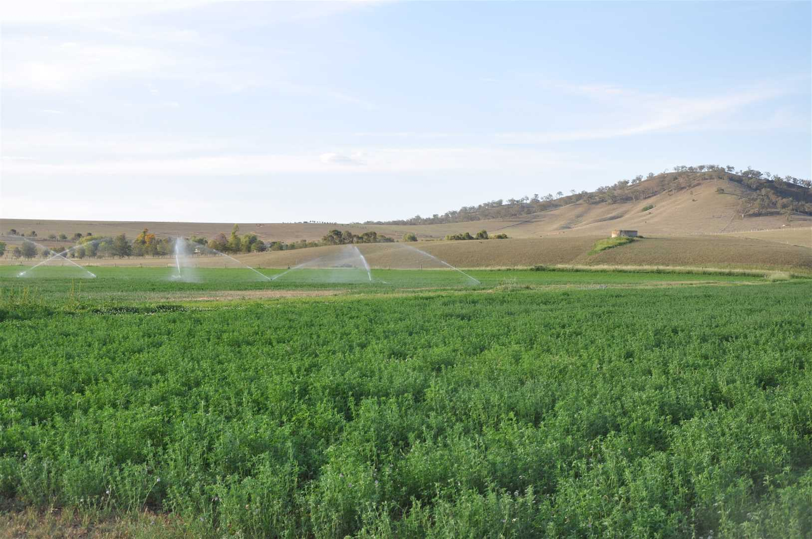 Prime irrigation property in the Segenhoe valley