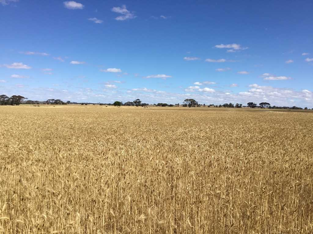 Badgebup / East Katanning  (530.54 ha / 1311ac)