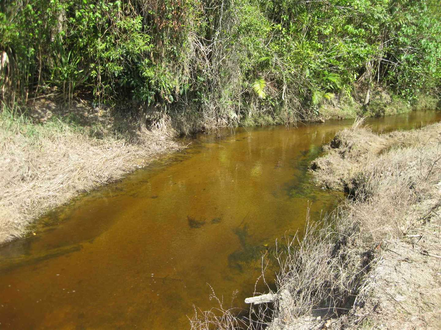 View of part of internal creek in the property