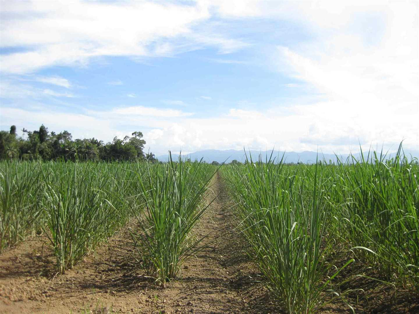 View of part of property (cane crop excluded), photo 10