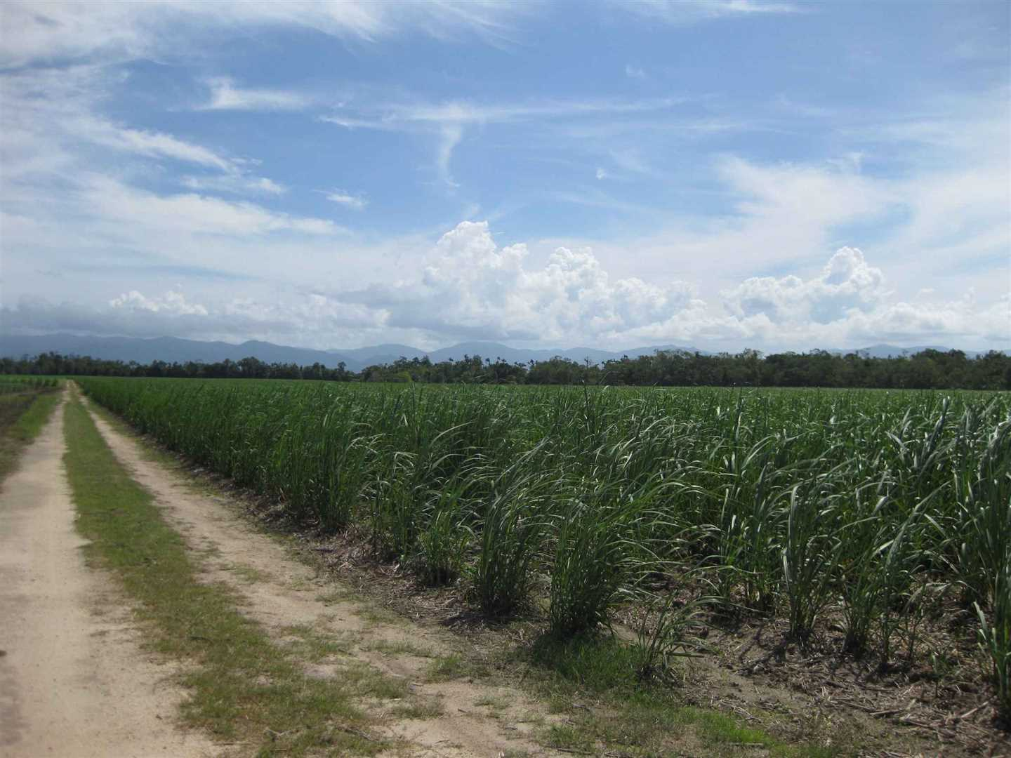 View of part of property (cane crop excluded), photo 11