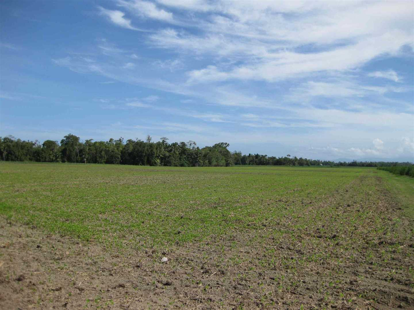 View of part of property (mostly fallow block with distant cane crop excluded), photo 2