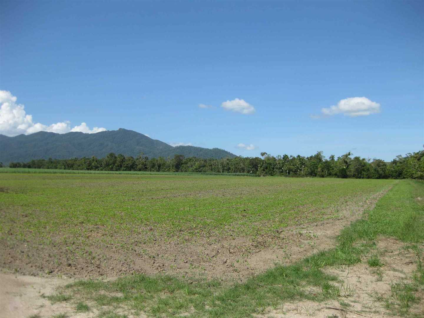 View of part of property (mostly fallow block with distant cane crop excluded), photo 5