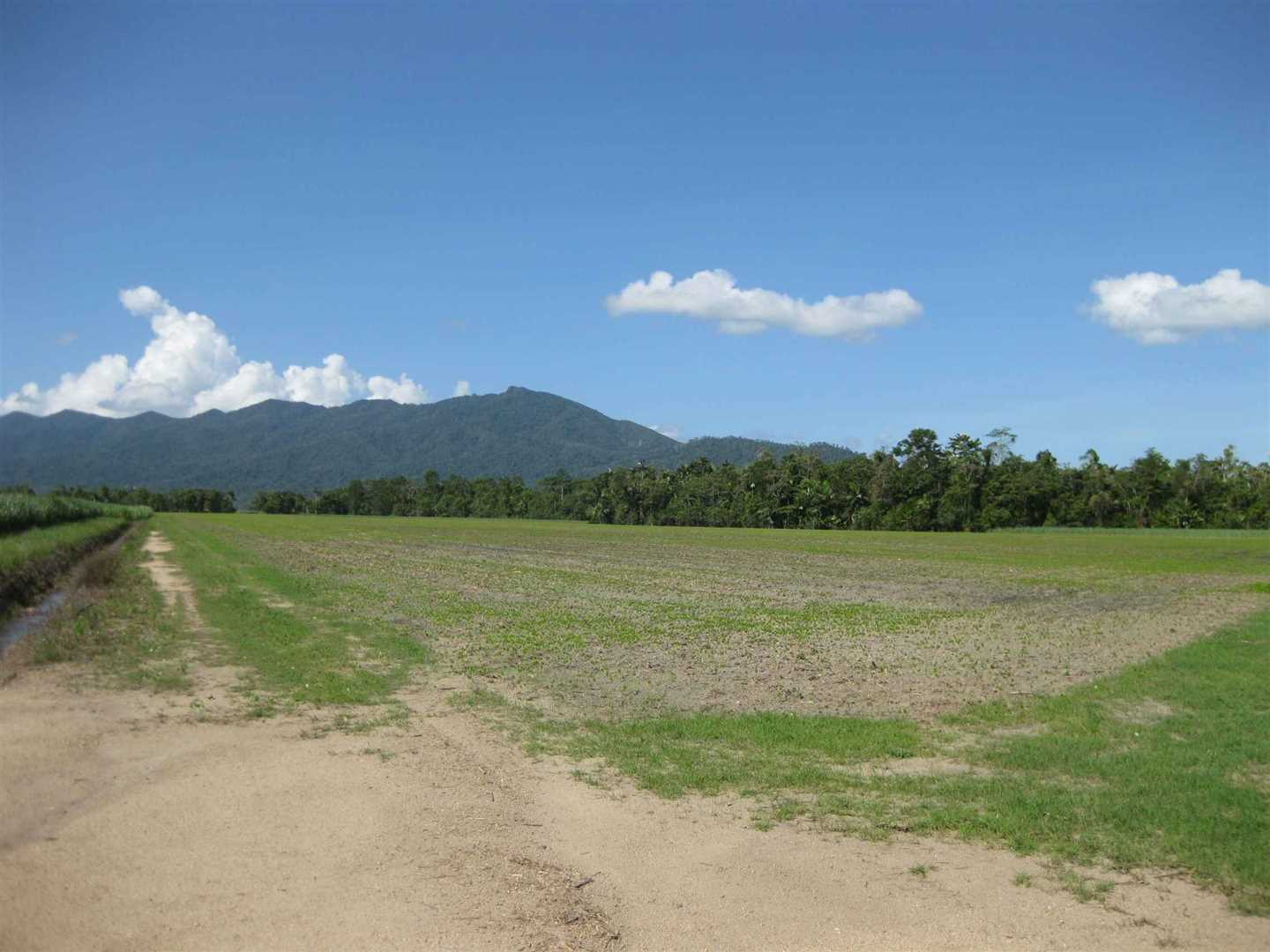 View of part of property (mostly fallow block with distant cane crop excluded), photo 12