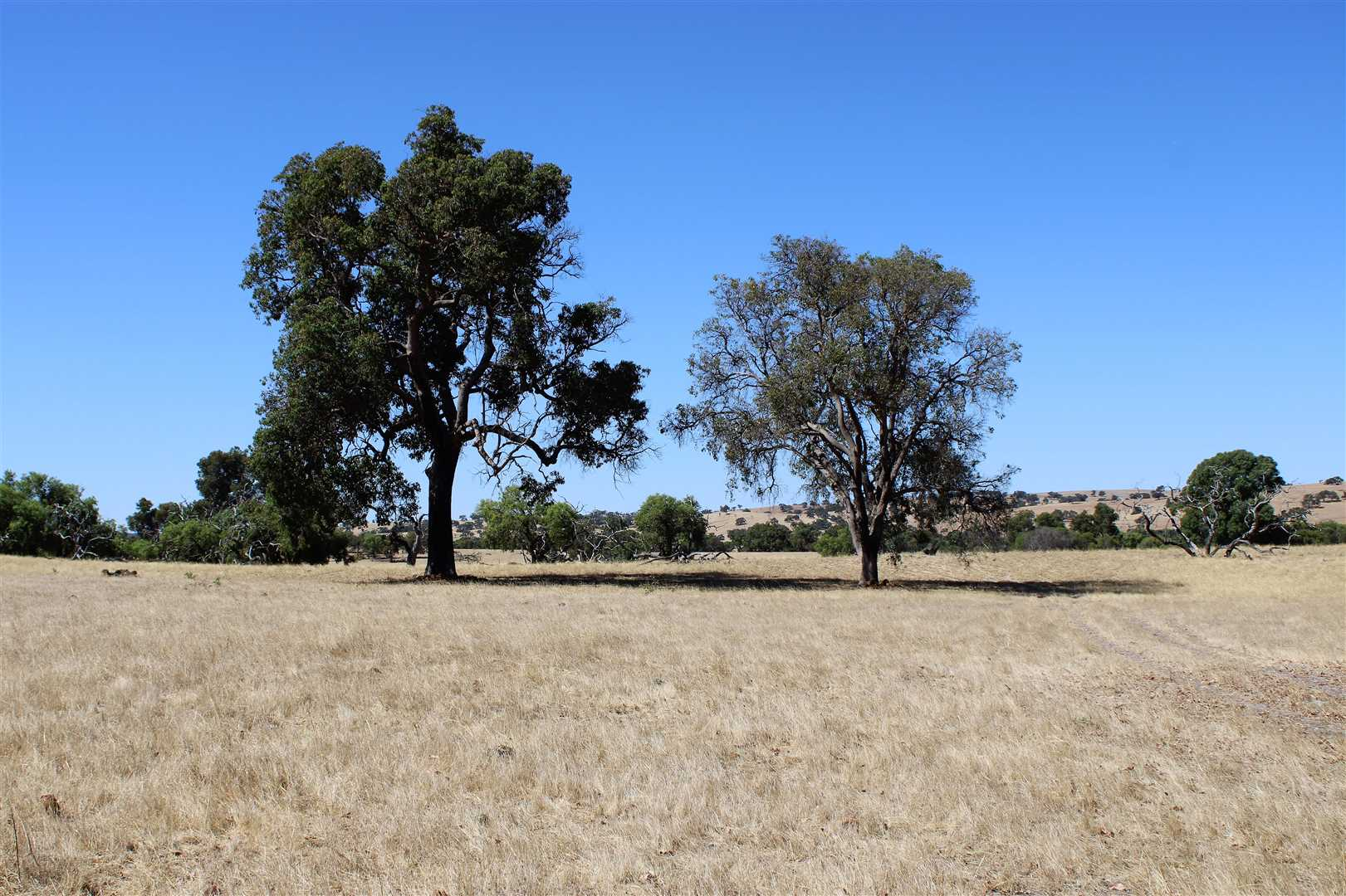 Redgum country