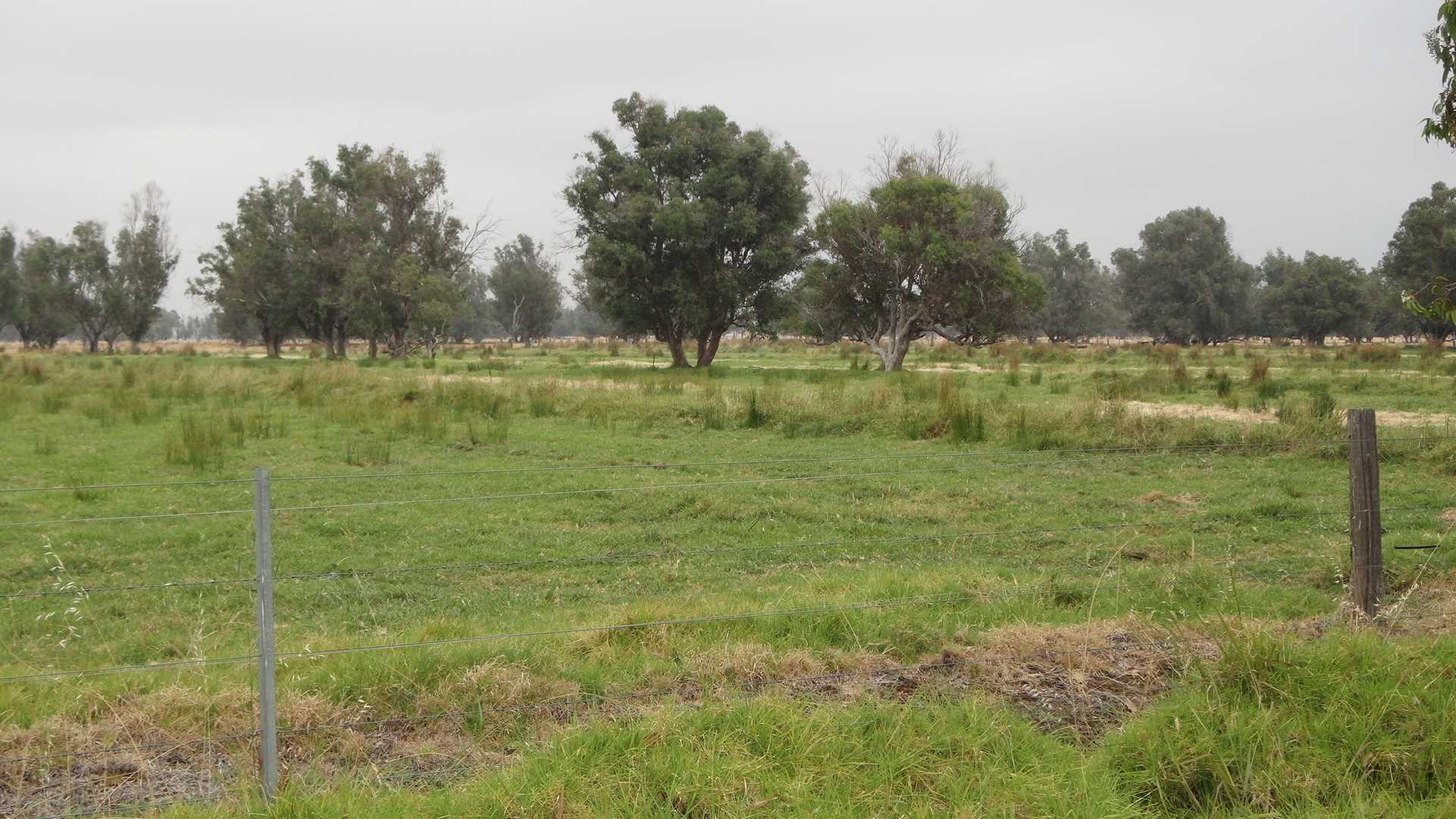 Hope Avenue & Bernies Lane Wokalup ( 293.2049 ha/ 24.5247ac)