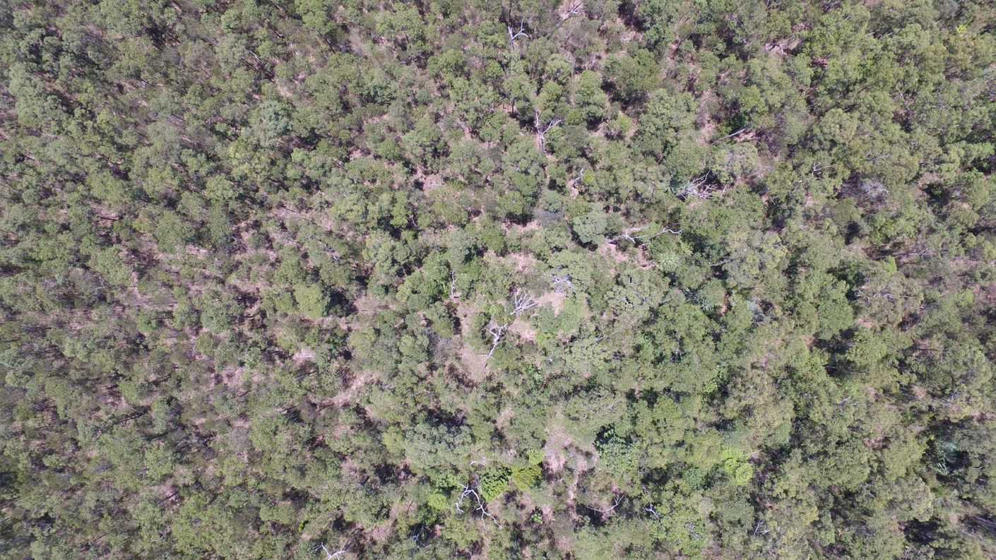 Aerial photo showing part of Lot 70 vegetation