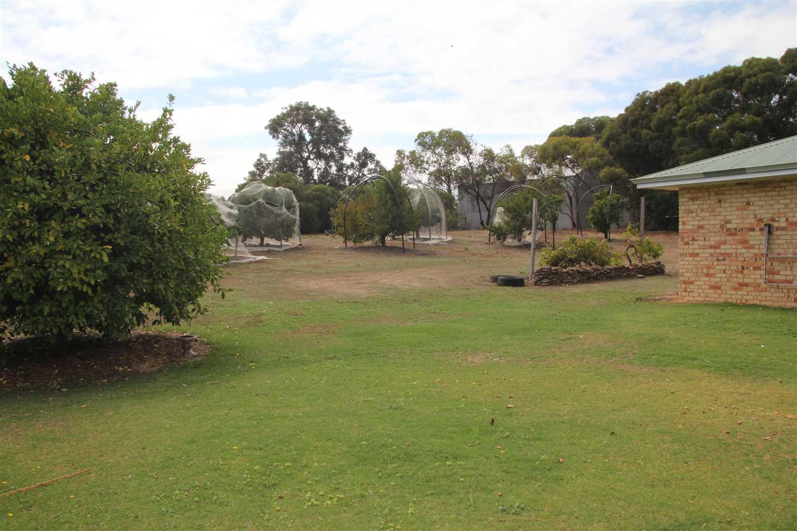 Fruit Trees/Back Yard