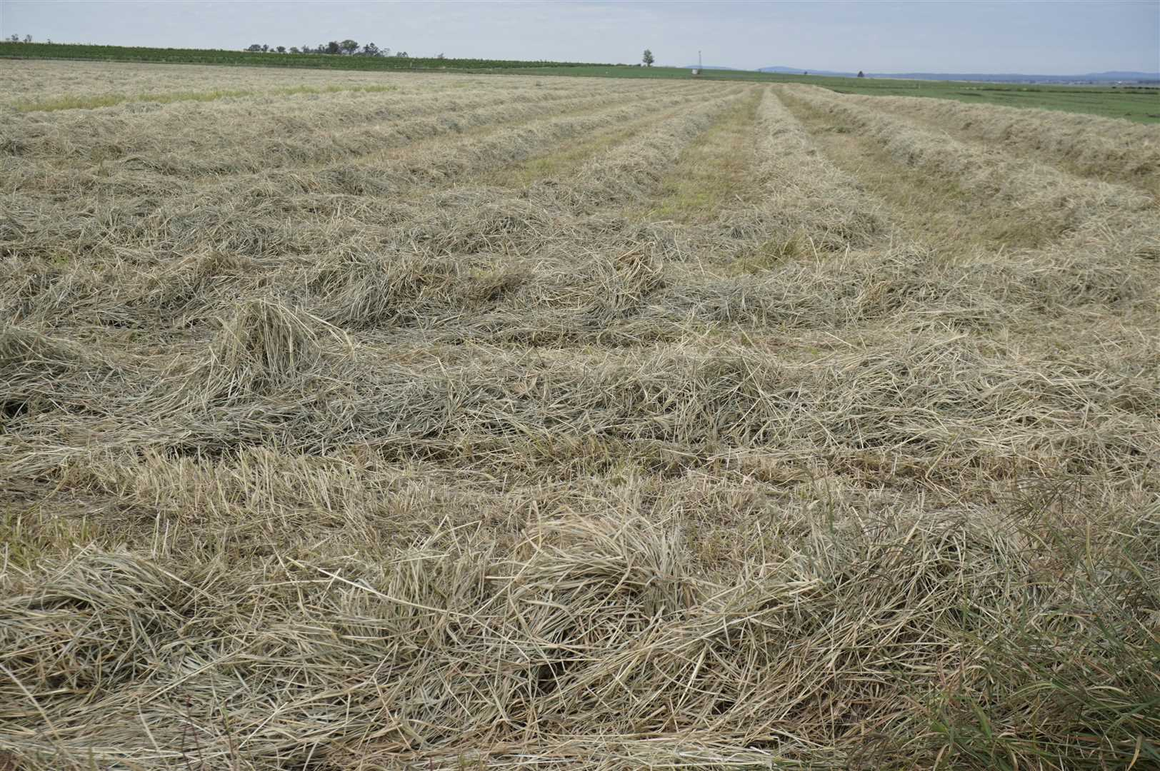 Quality Hay Production