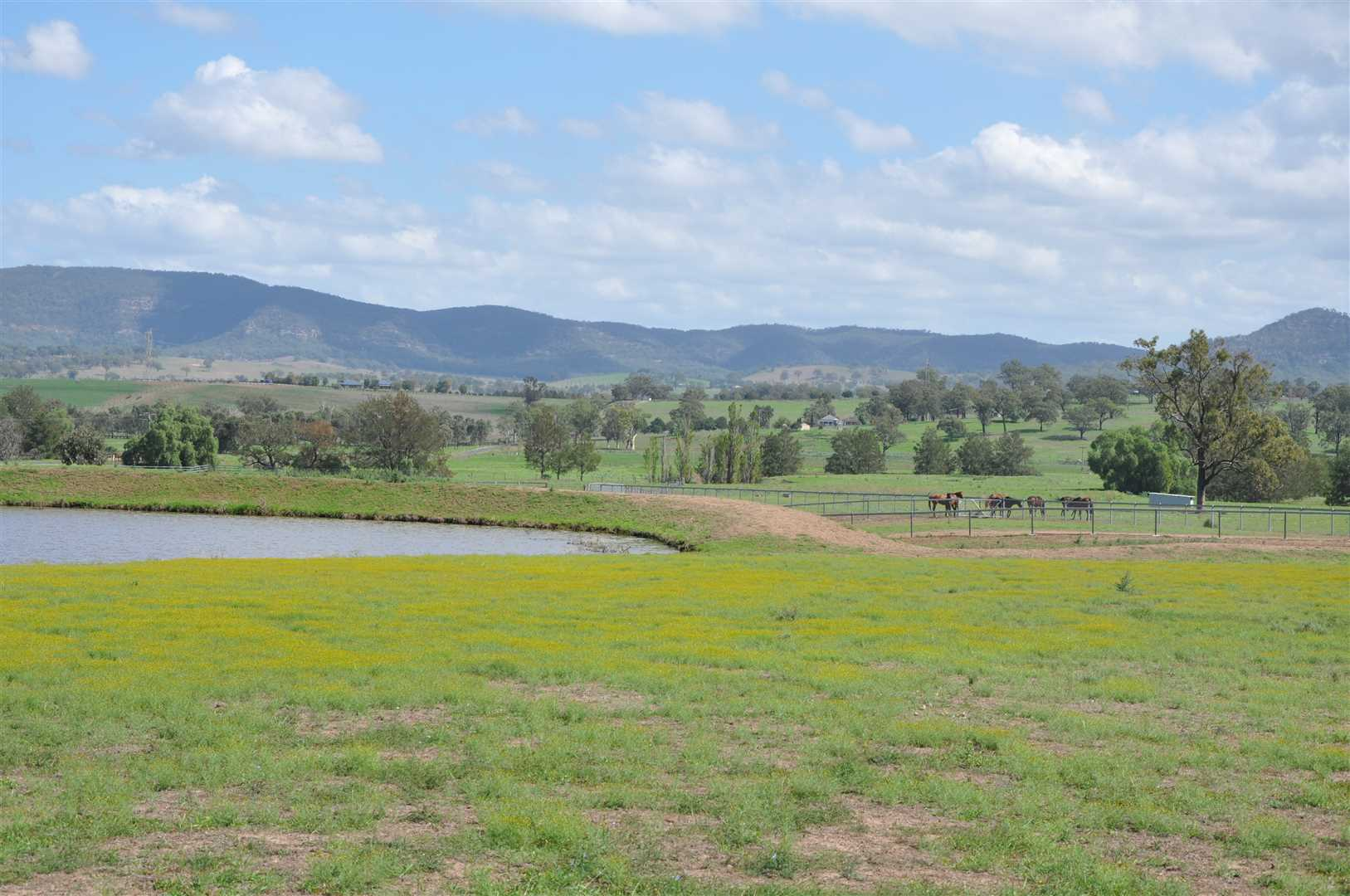 Rare rural opportunity in the heart of the Upper Hunter