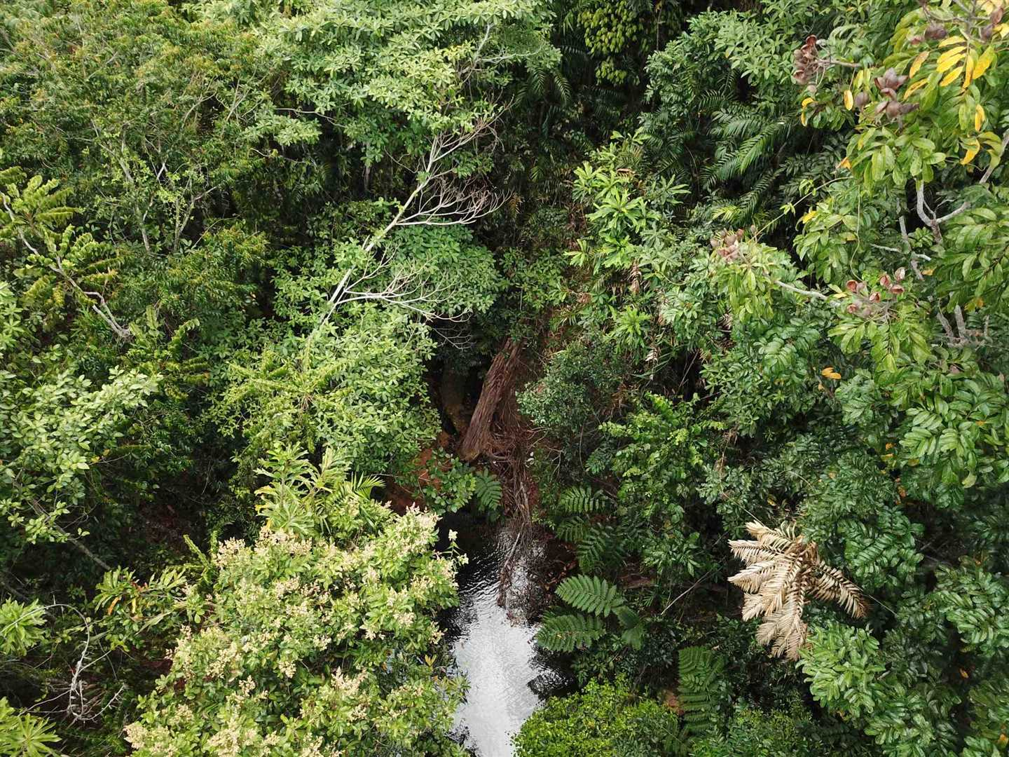 Aerial photo showing part of a creek and rainforest on the property