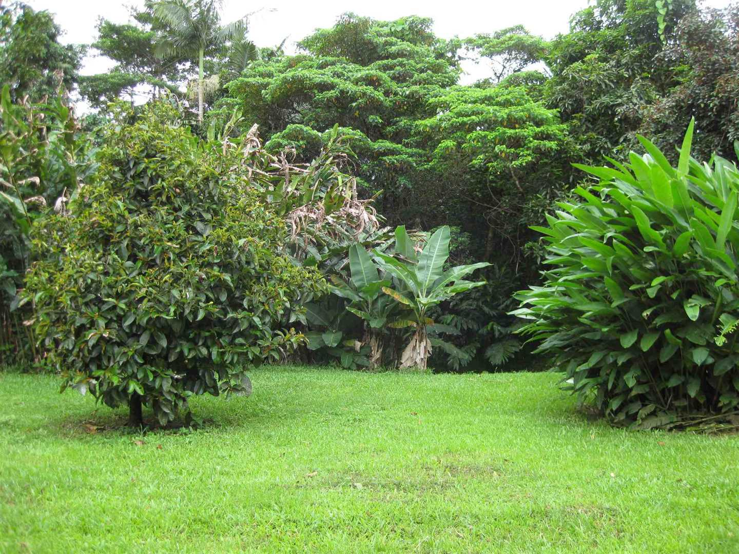 View of part of grounds adjacent to the home