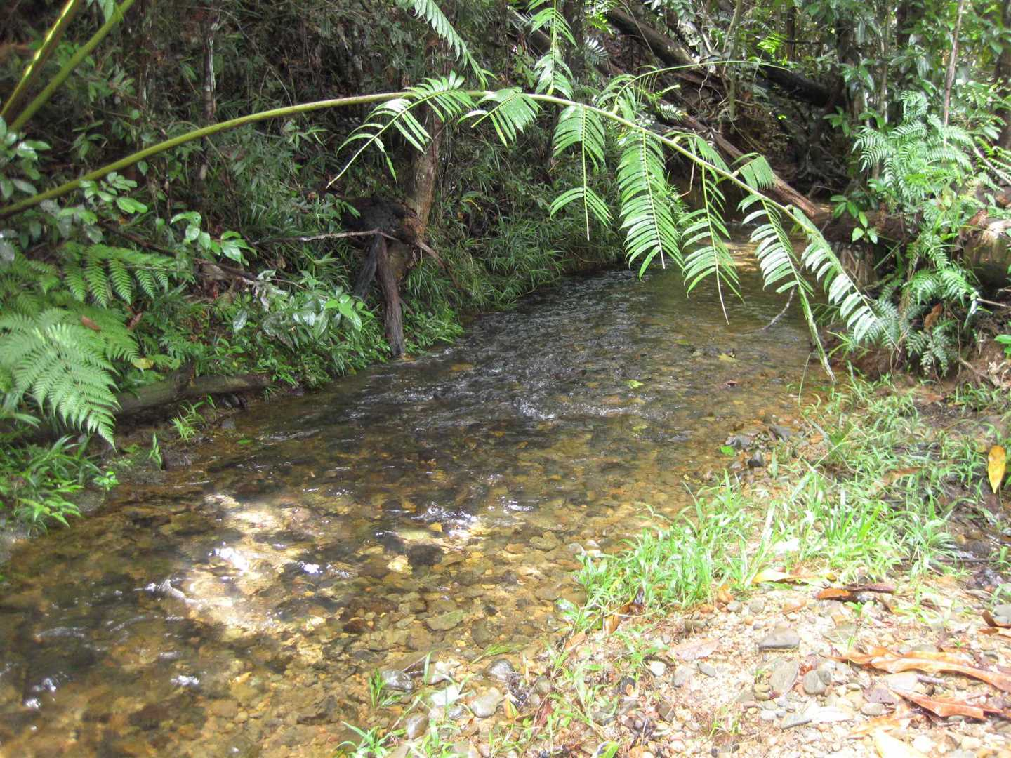 View of part of permanent creek one of two, photo 1