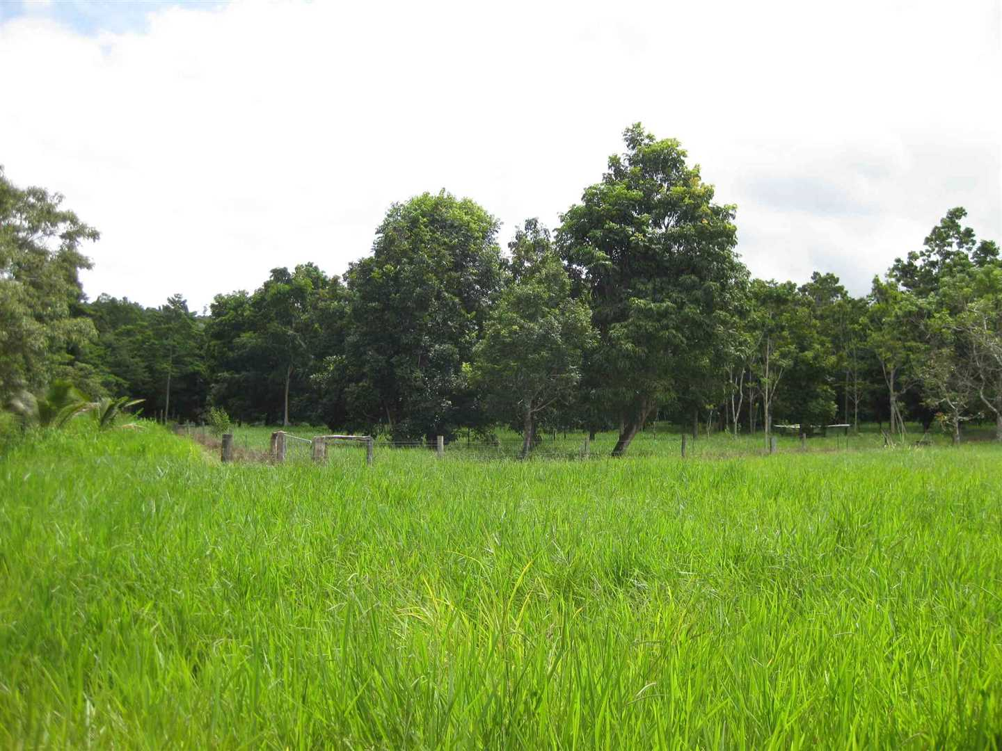 View of part of property from one of the two fenced paddocks, photo 1