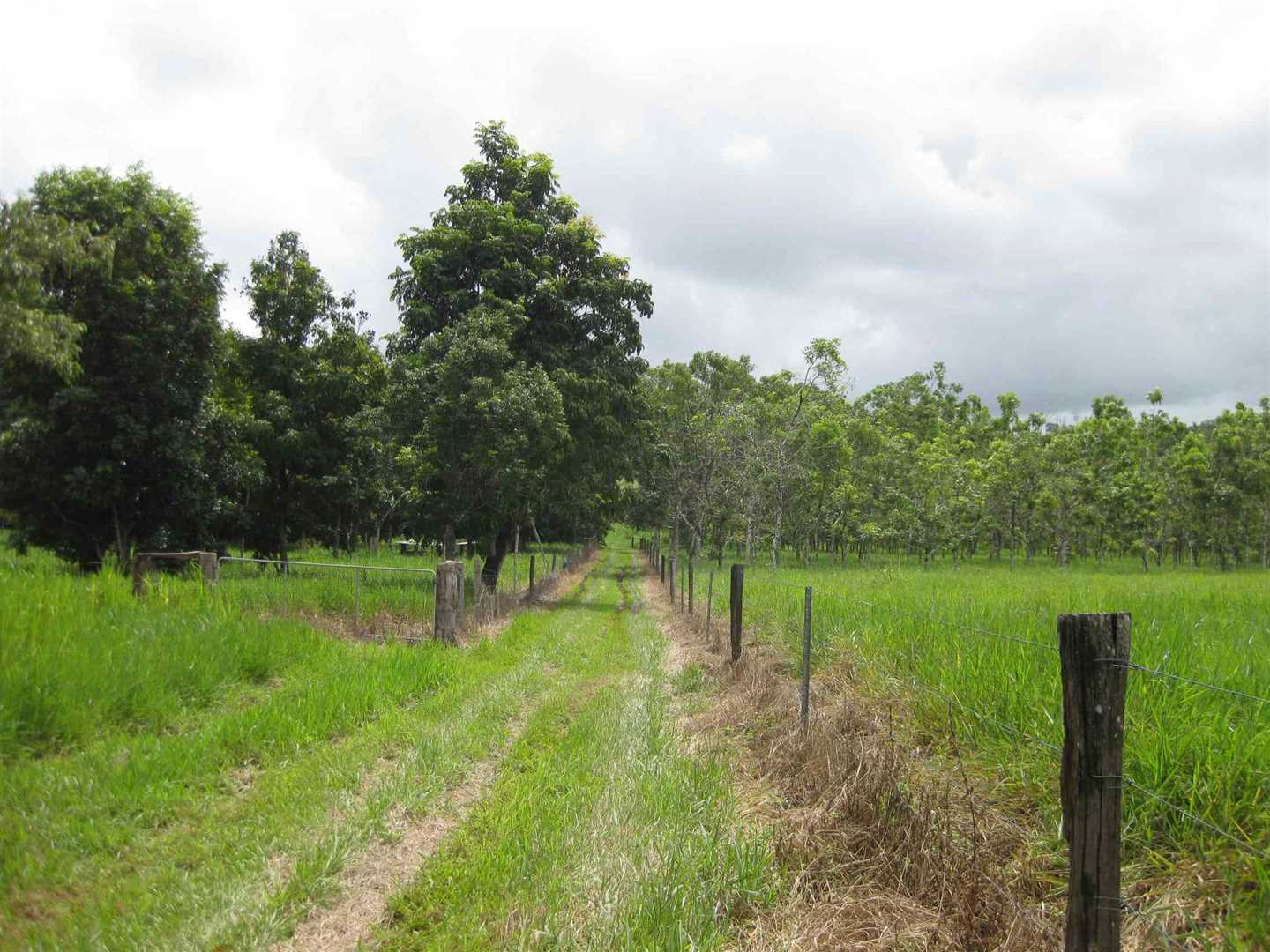View of part of property showing part of the two fenced paddocks