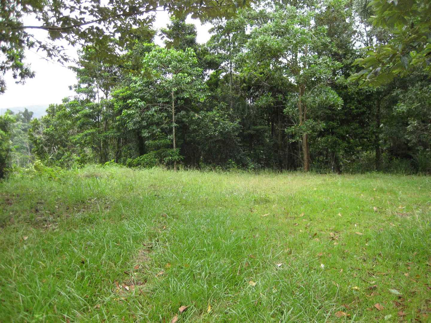 View of part of the potential homesite in the centre of the property