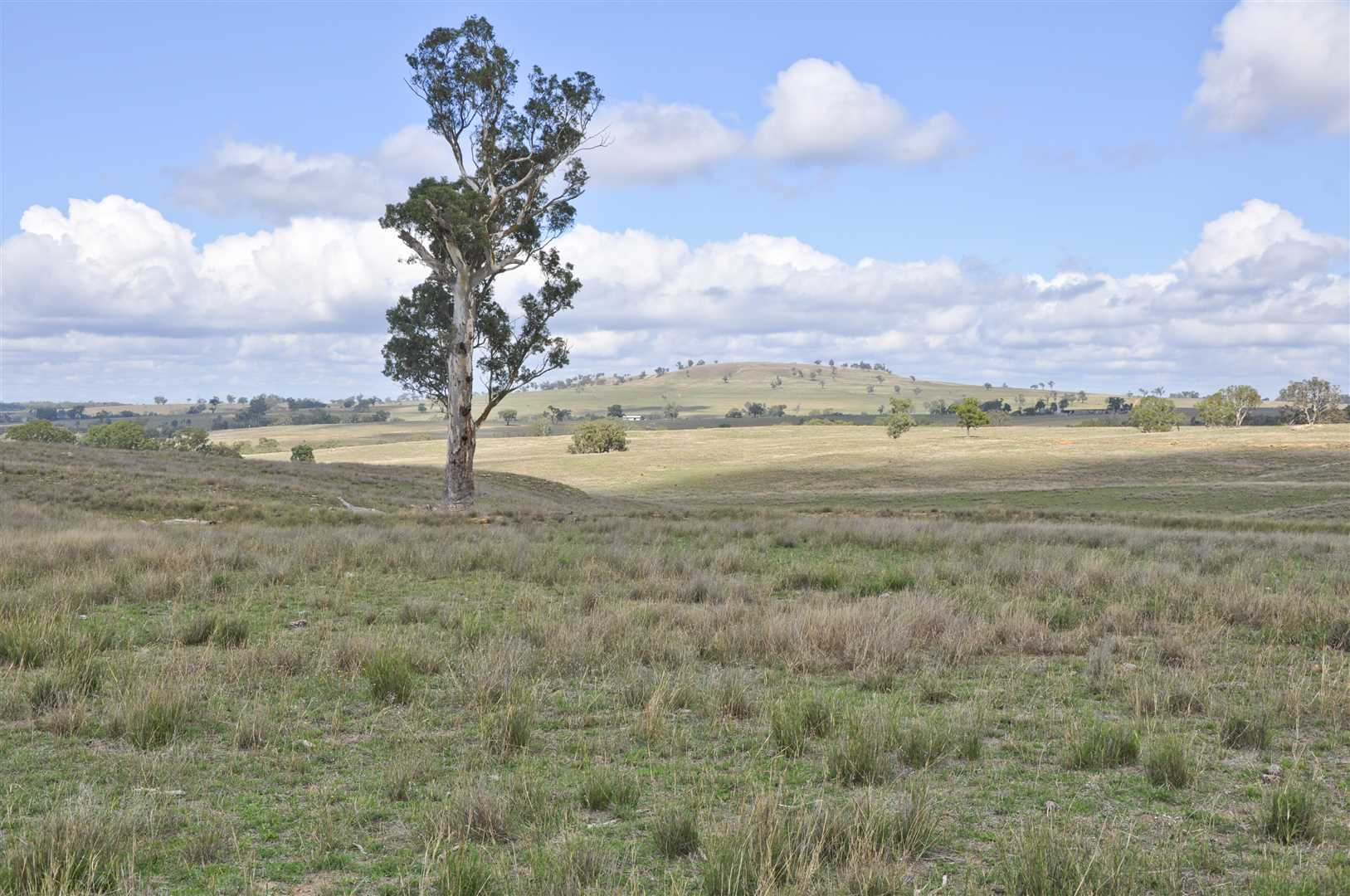 Nice balance of country for the sheep/cattle producer