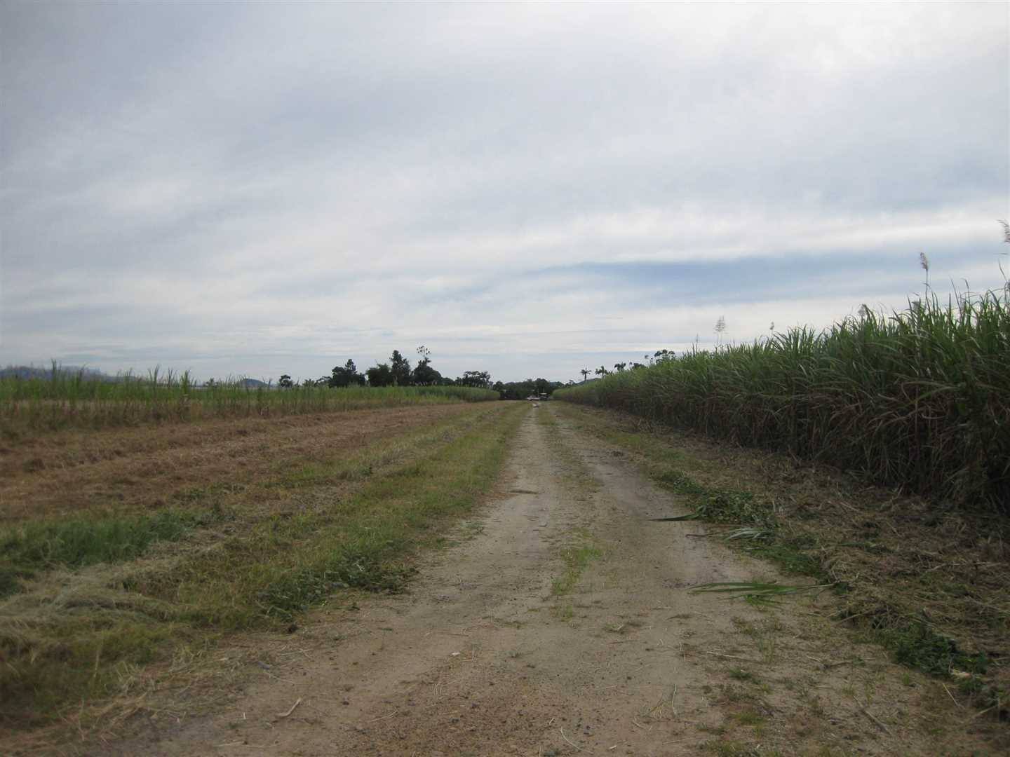 View of part of property, photo 1 (cane crop excluded)