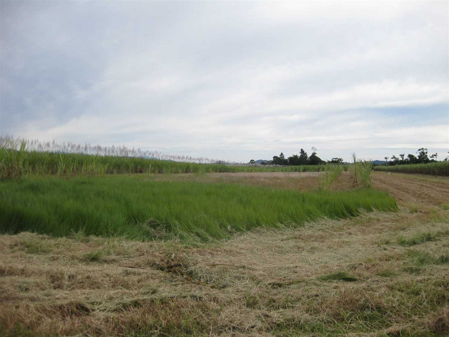 View of part of property, photo 3 (cane crop excluded)