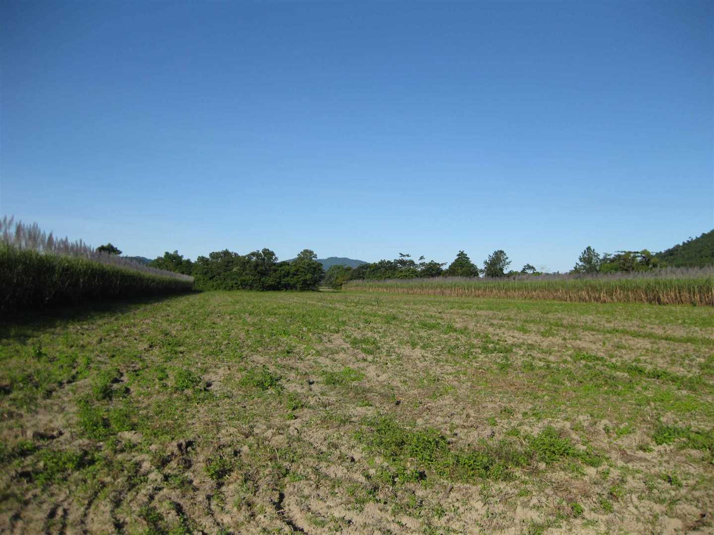 View of part of property (cane crop excluded), photo 2