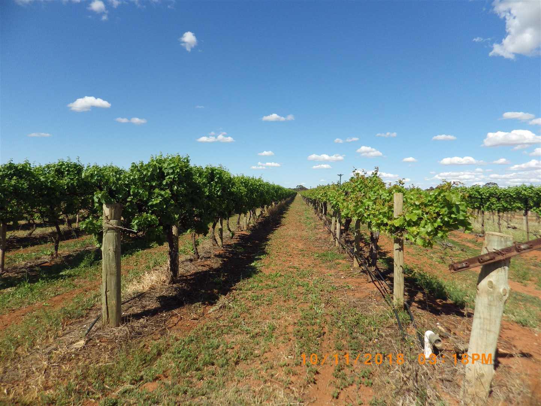 Vines.southside