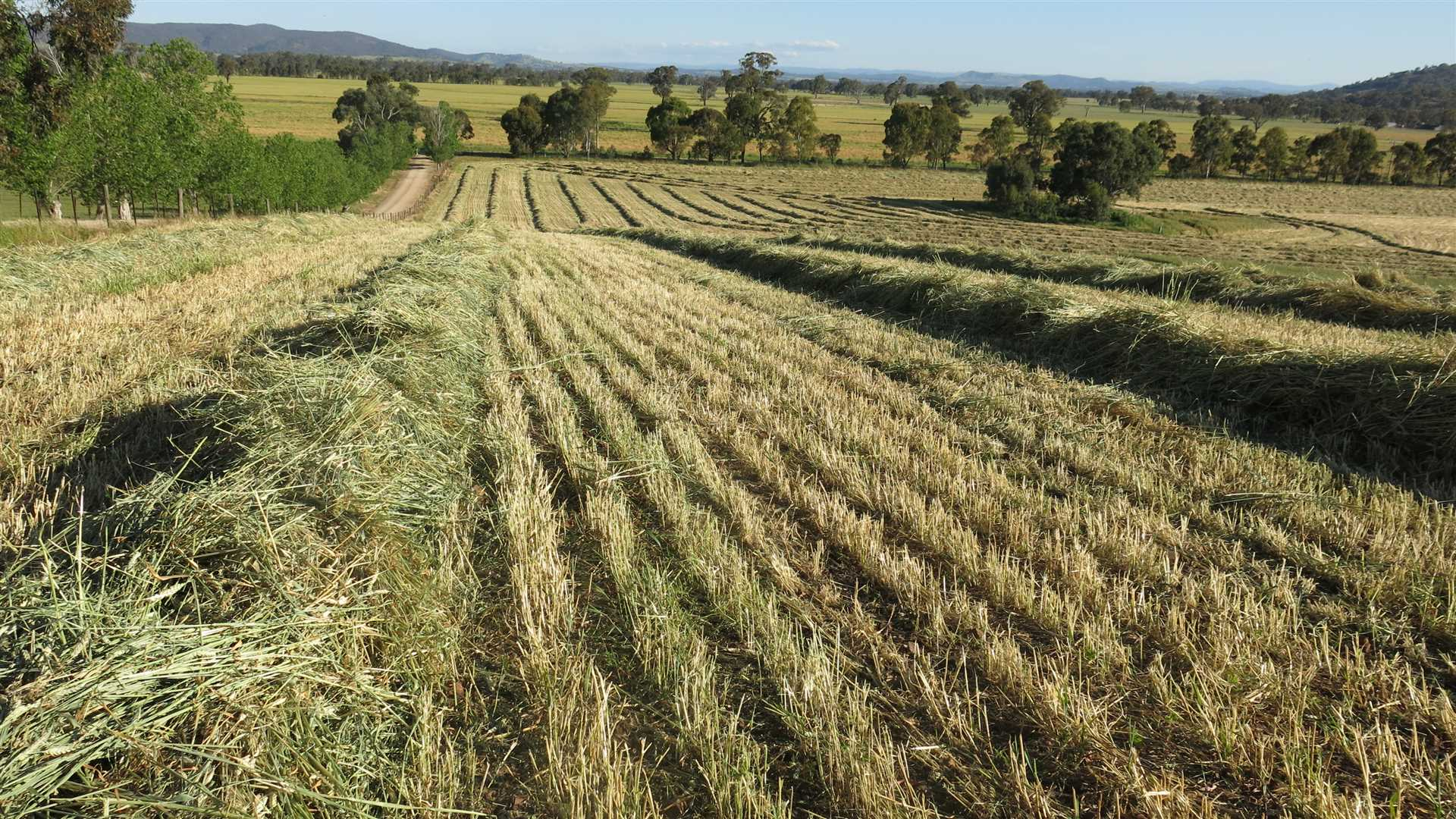 Fodder production for strong stocking rates