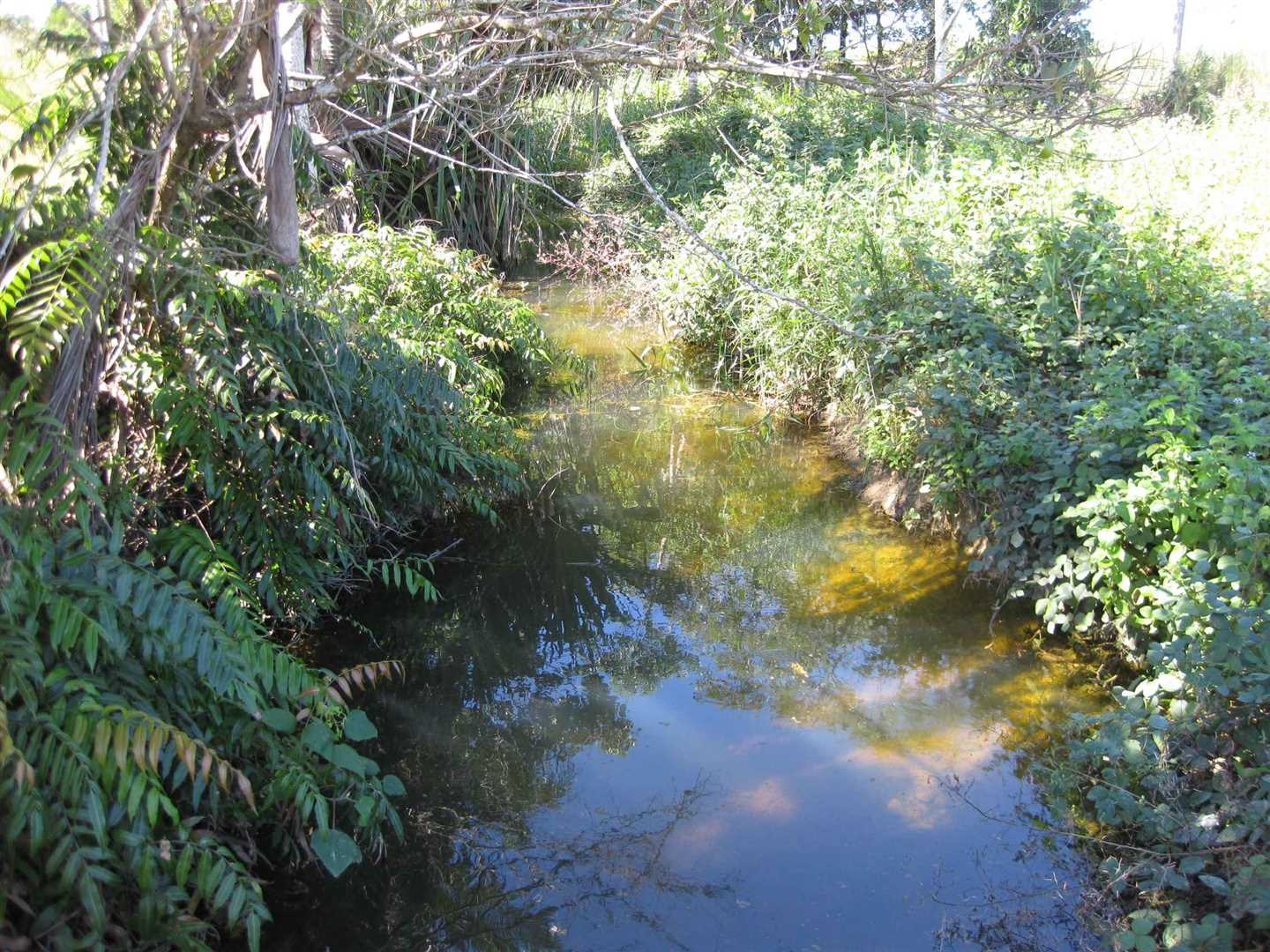 View of part of second internal creek in the property