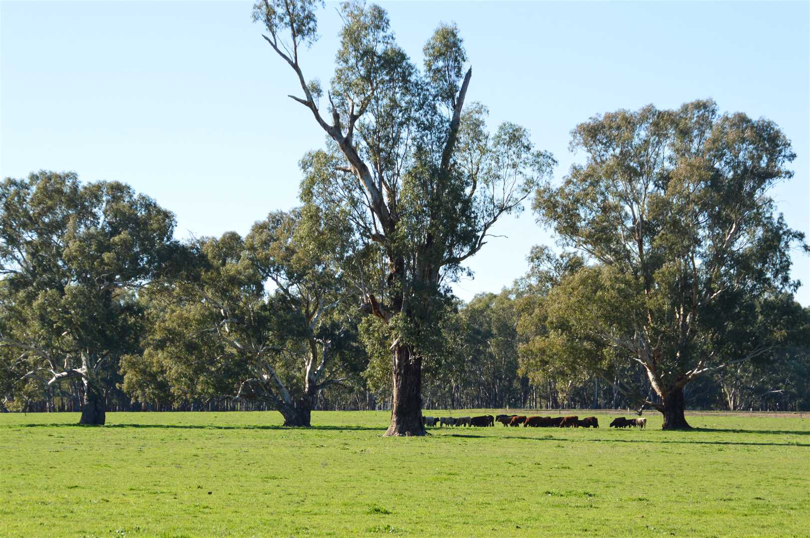 Versatile 422 acres north west of Wagga