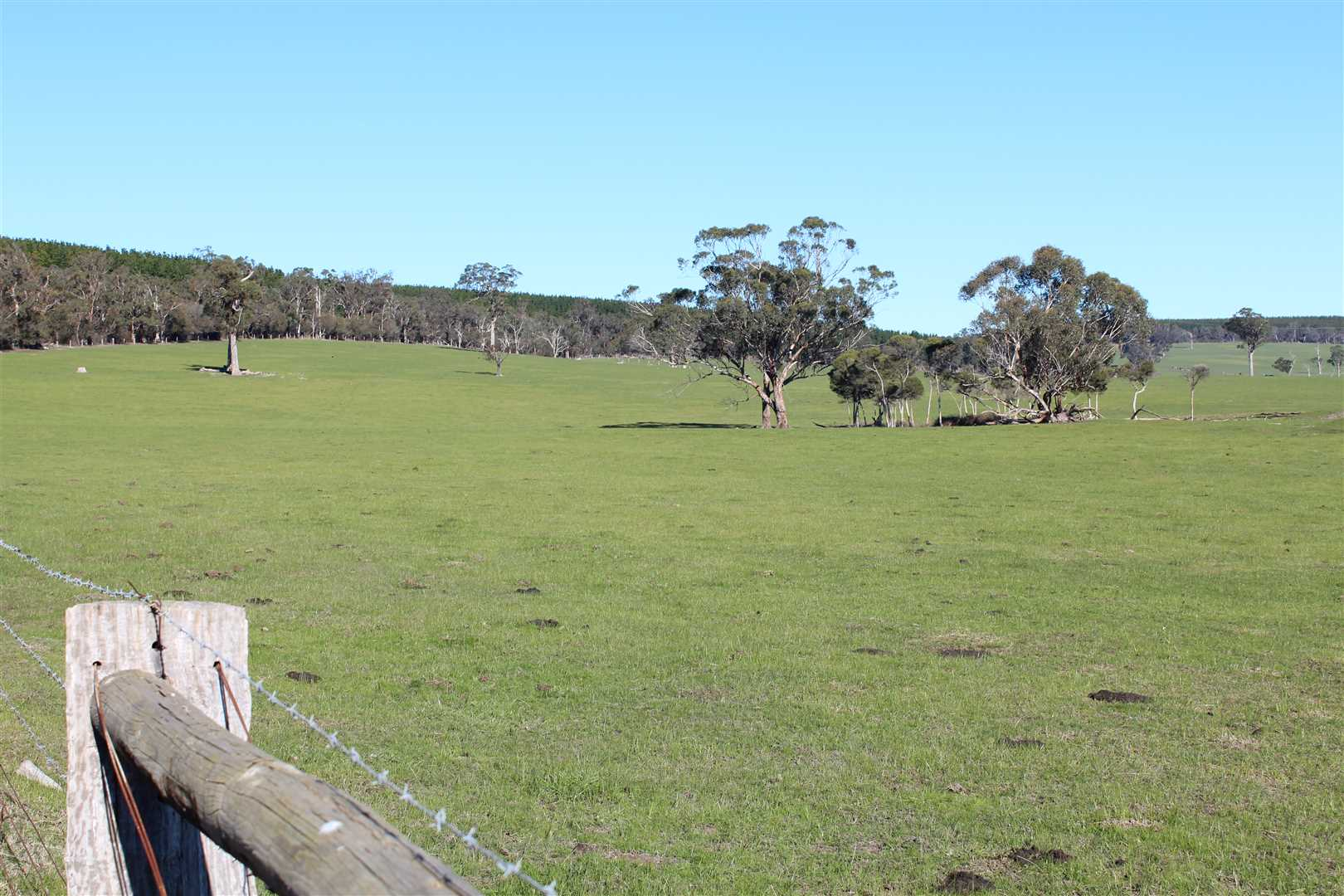 352 Acres of Prime Grazing Property