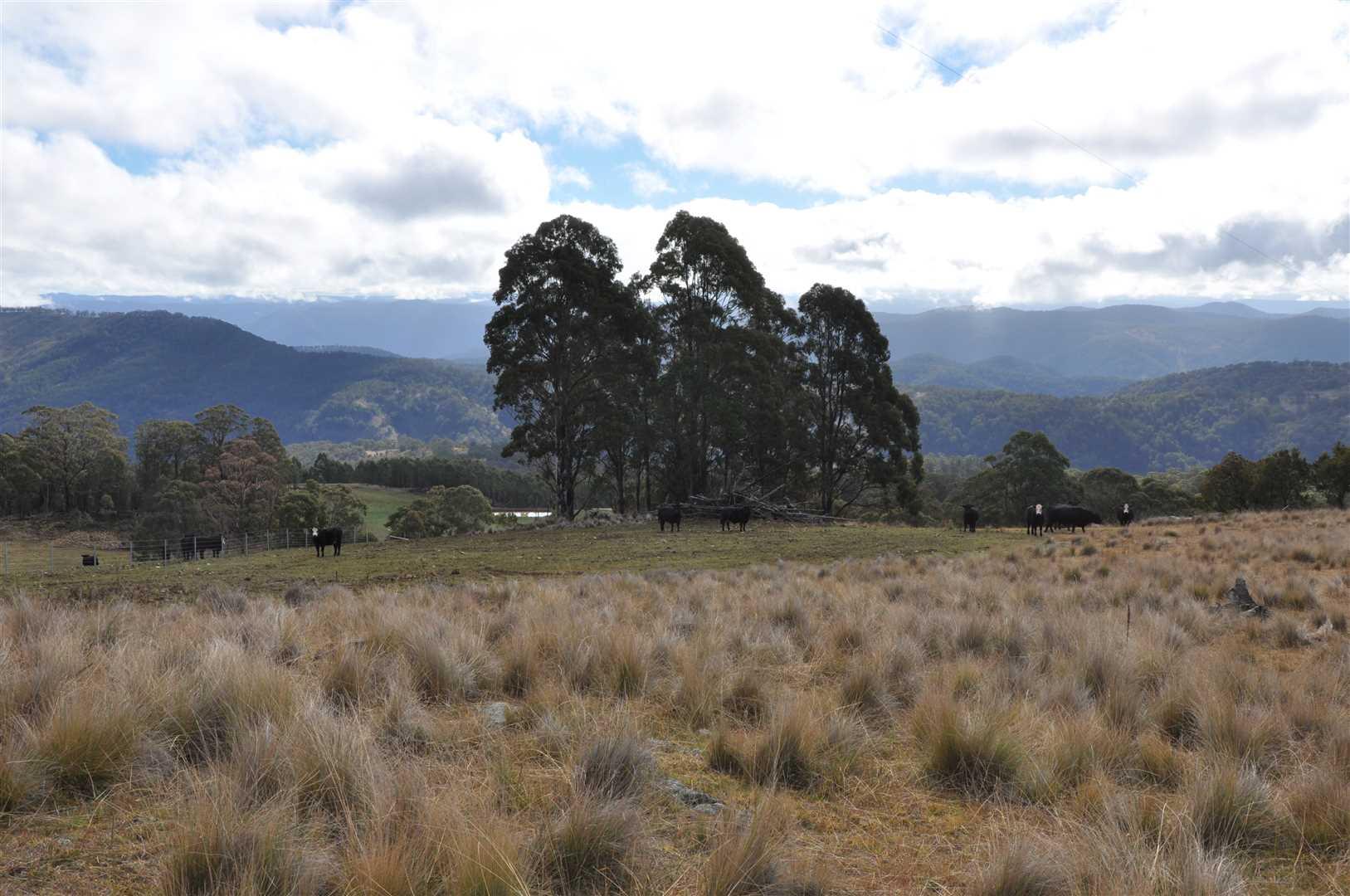 Affordable rural land on the fringe of the Barrington Tops
