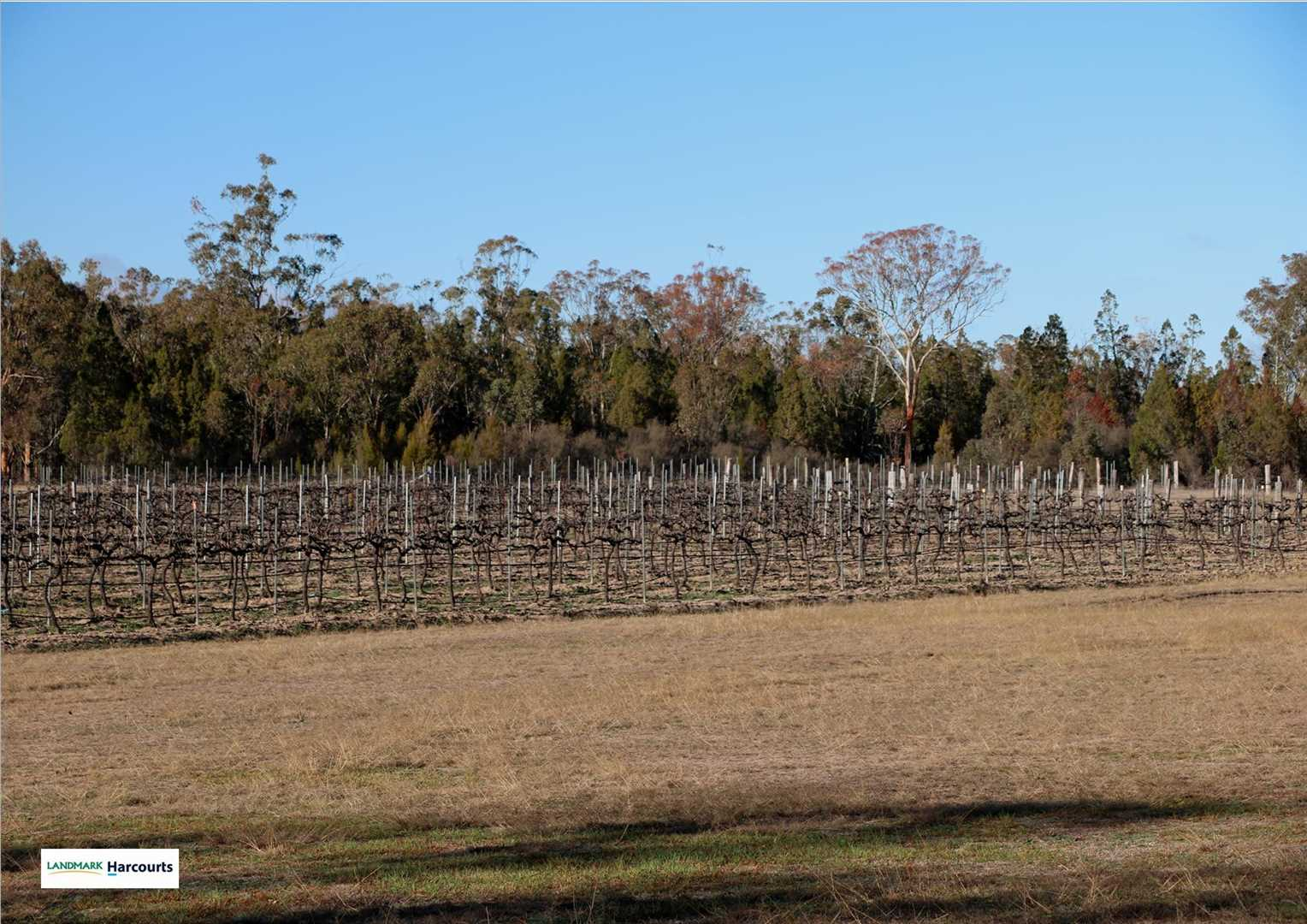 5 acres under vines with plenty of room to expand