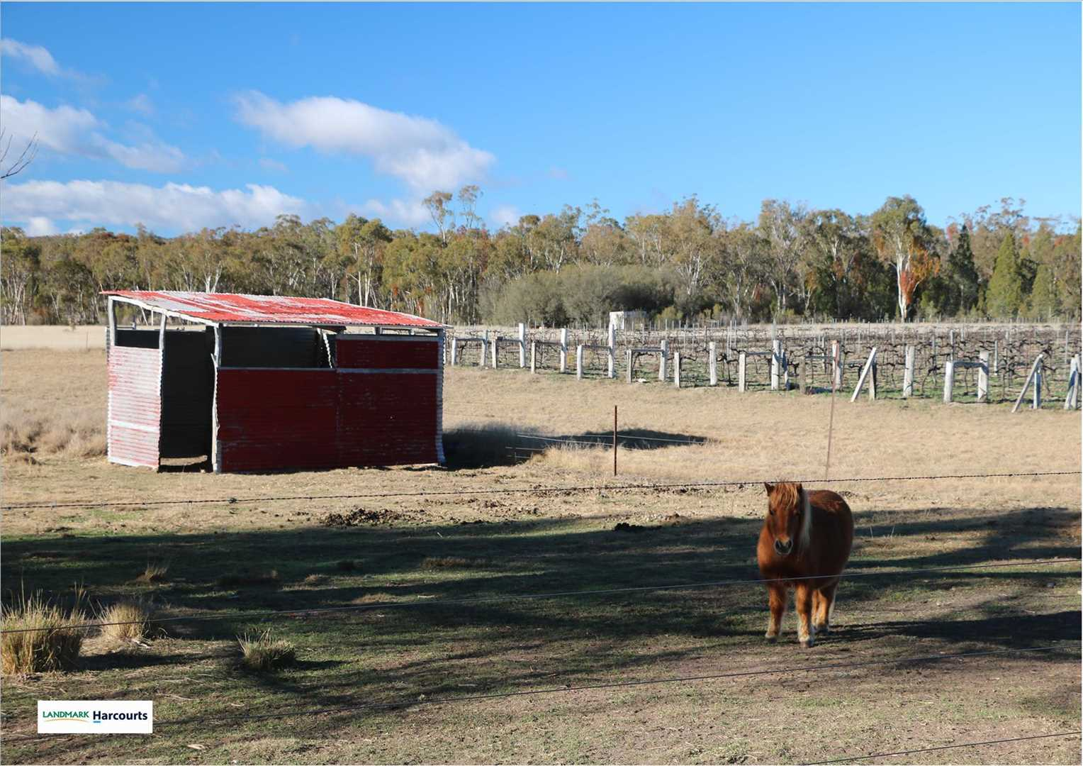 fully fenced paddock with stable