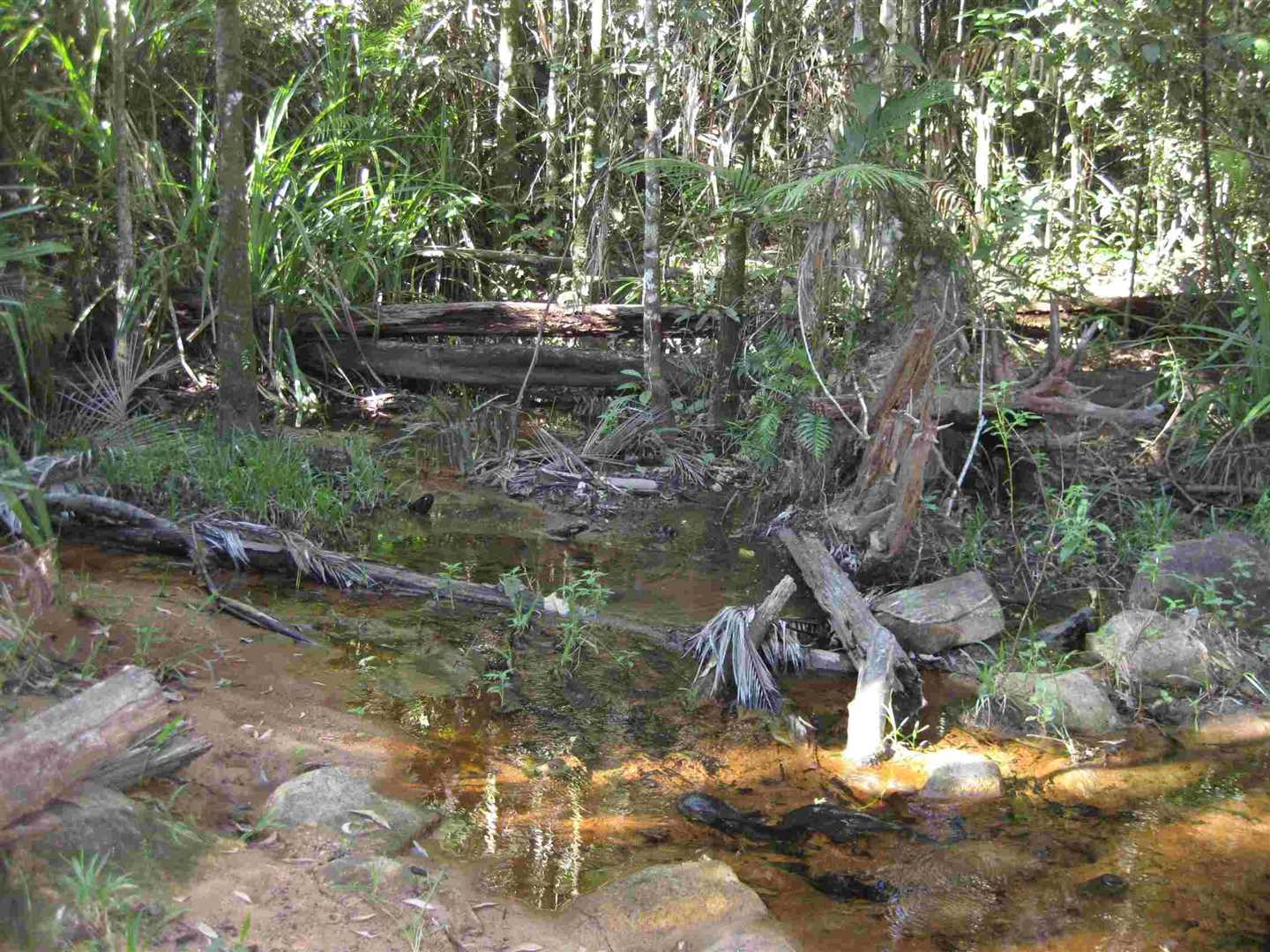 View of part of creek in the property, photo 1 (old photo, to be updated)
