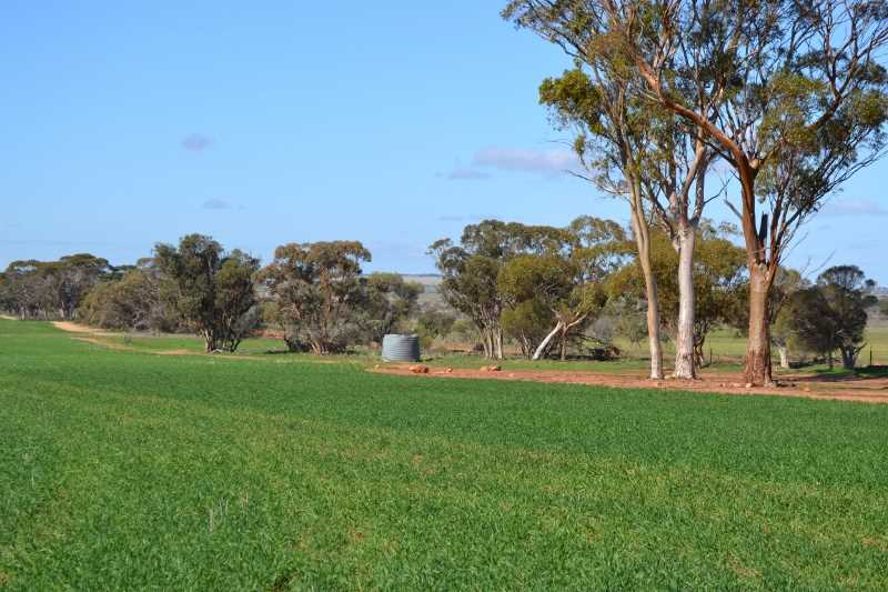 Fully Improved, Quality Soil Types, Well Farmed