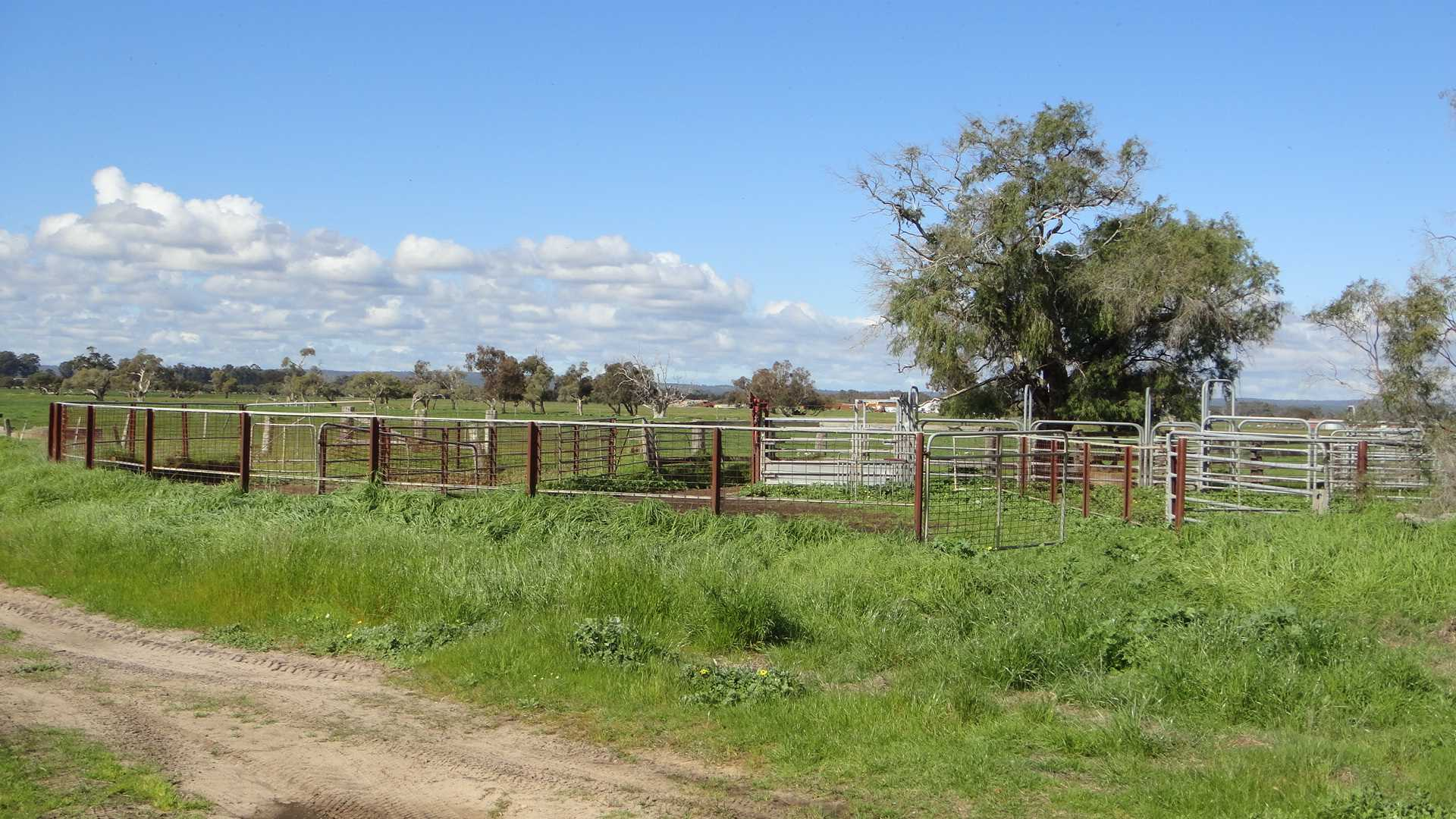 Open grazing and fodder production block